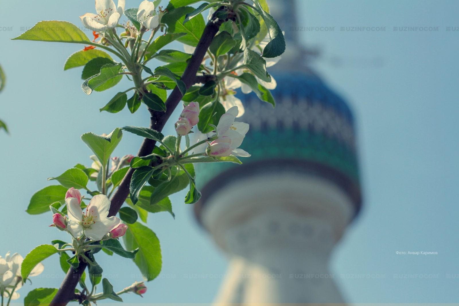 Tashkent (Тошкент) (7)